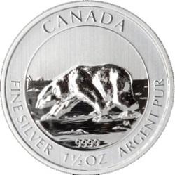 Silber Polarbär Kanada